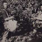 Husband and wife in picking apples, New Zealand